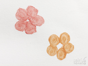 THREE 2016年 SAKURAISM コレクション  ウイスパーグロスフォーアイ紙へ色だし