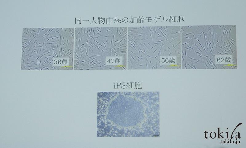 コスメデコルテ 新製品発表会 同一人物の加齢モデル細胞
