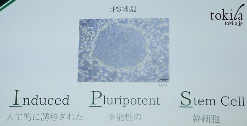 コスメデコルテ 新製品発表会 iPS細胞
