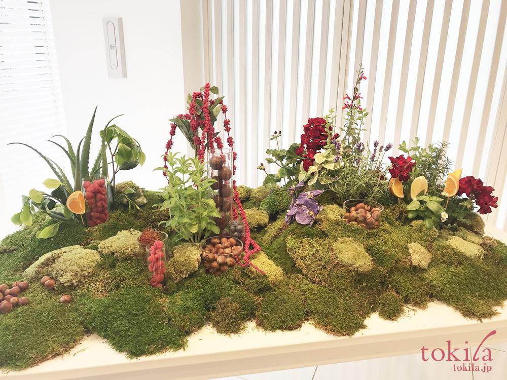 クラランス2018SUMMER発表会 ウォーターリップスティンに配合されている植物たちのディスプレイ