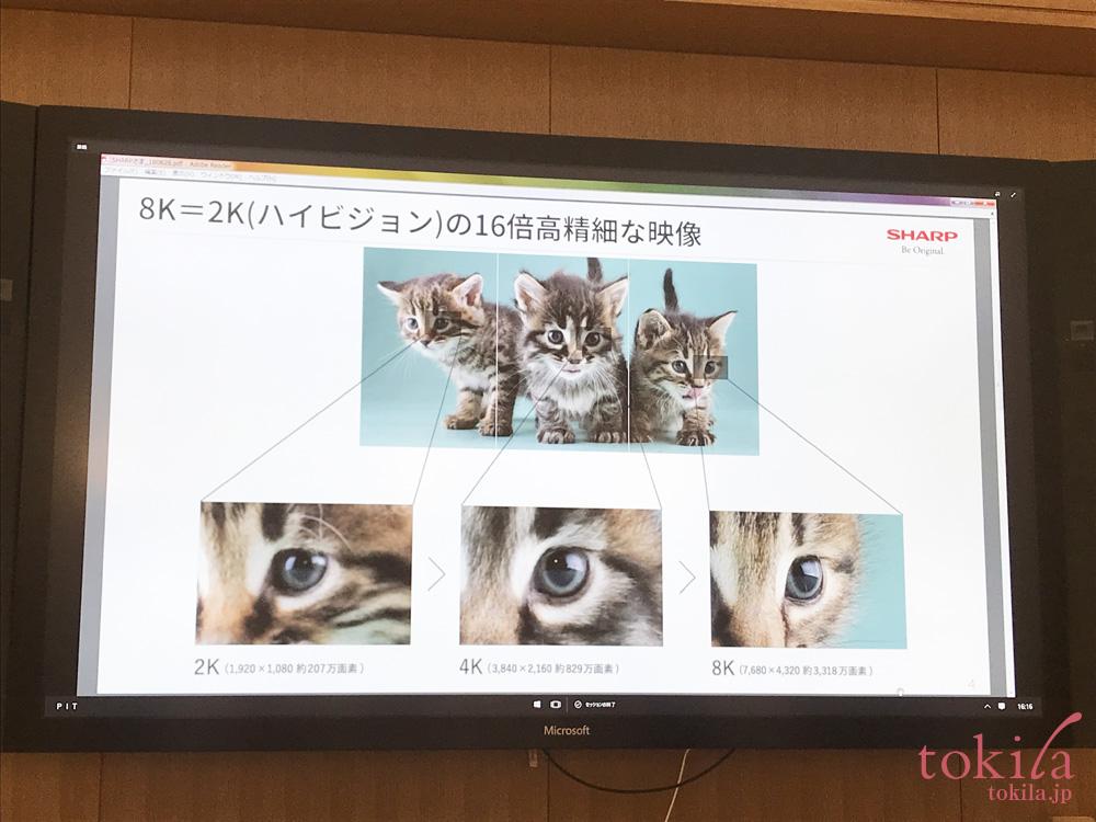 PLAYLIST 夕活 猫の毛並みまで映る8K映像
